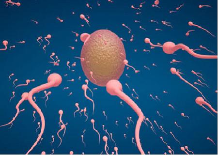 Sức sống tinh trùng thấp do nguyên nhân nào